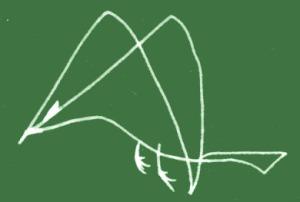 bird-05